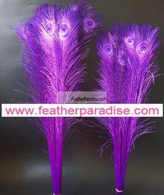 Peacock Eye Feathers 40-45