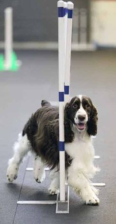 Agility Classes  | W