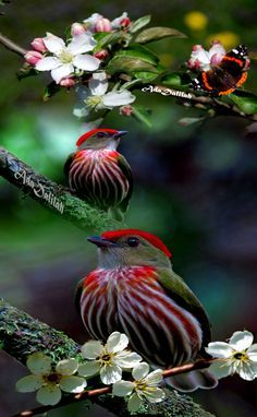 5 pictures mix in to a single imageLike it Kinds Of Birds, All Birds, Cute Birds, Pretty Birds, Little Birds, Beautiful Birds, Animals Beautiful, Cute Animals, Angry Birds