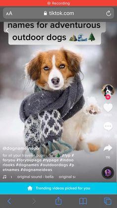 Super Cute Puppies, Baby Animals Super Cute, Cute Baby Dogs, Cute Funny Dogs, Cute Dogs And Puppies, Cute Little Animals, Cute Funny Animals, Doggies, Cute Animal Names