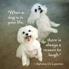"""""""When a dog is in your life, there is always a reason to laugh."""" ~ Alphonse De Lamartiine #dog #quote #laugh"""