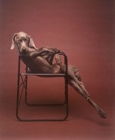 William Wegman,Lolita, 1990 (+)  Weims are little human in a different body. Missy used to sit so regal like this