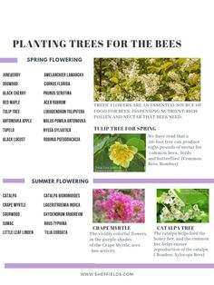 Spring planting we have many choices, this chart recommends spring-flowering tree seed and summer flowering tree seed for backyard gardens so you will have plants for the bees. Tree flowers are an essential source of food for bees. Blooming Trees, Flowering Trees, Herb Seeds, Garden Seeds, Growing Seeds, Growing Tree, Conifer Trees, Evergreen Trees, Fruit Tree Nursery