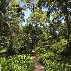 【annapurnacao】さんのInstagramをピンしています。 《姪っ子ちゃんと、世界でジャンプ!  目を開いて、 耳をすませて、 触れるものを感じながら、 暮らしていたら、 世界は美しい! 人生は素晴らしい!  #マレーシア #malaysia #langkawi #thedatai  #travel #trip #マイトリップ #myジャラン #森 #楽園  #datai #ジャングル #rainforest #beach #sea》