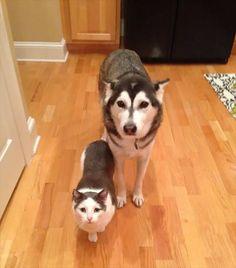 種族は違うのに、毛色や姿かたちが似すぎているせいで兄弟に見えてしまう…。 そんな動物たちの画像を、海外メディアboredpandaよりご紹介します!  1.  2.  3. nbsp [...]