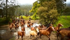 Horse mustering - Glenworth Valley NSW