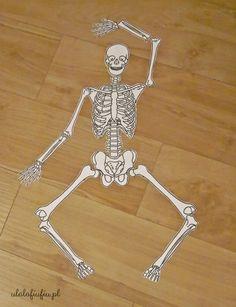 szkielet człowieka sceleton puzzle