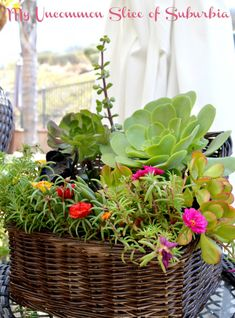 Grab a old basket and turn it into a Succulent planter for the perfect housewarming gift.