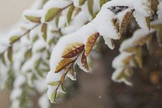 Winter is coming. While the most optimal times to plant the Bios Urn are in Spring and early fall, the Bios Urn can still be successfully planted in winter. Joyce Meyer Ministries, Sabbath Day, Saint Esprit, Snow Pictures, Birth Of Jesus, Palm Sunday, Scene Image, Winter Pictures, Winter Images