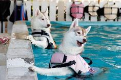 OMG! I don't really understand why they are in life jackets, but this is the cutest thing evvvver! :)