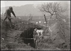 Italian soldat I think correct me if I'm wrong, helping a doggy cross a trench during the battle of Asiago World War One, Second World, First World, Military Working Dogs, Flanders Field, War Dogs, World History, Wwi, Historical Photos