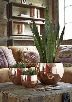 Las mejores plantas de interior: dónde comprarlas y cómo cuidarlas - The Deco Journal
