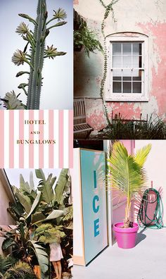 i spy: tropical pink. / sfgirlbybay