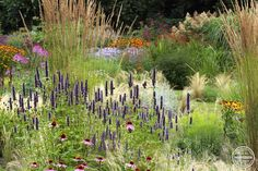 Agastache, Echinacea, Stipa and  Calamagrostis acutiflora 'Karl foerster'.