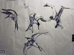 sea birds and gull sketch brush