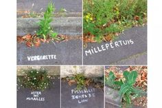 A graffiti artist / botanist in Nantes is labeling wild herbs.
