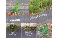 A Nantes, une mystérieuse graffeuse nomme les plantes des rues