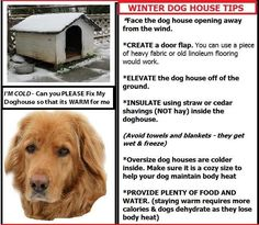Winter Dog House Tips~ Or bring them in where it is nice and cozy...with you!