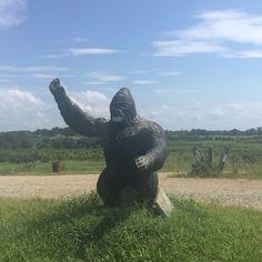 #covernashville #gorilla #statue #smalltown #stuartville #nashville