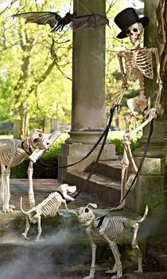 Thrill them to the bone with our Skeleton Scene Kit. Allow our lifesize skeleton and his pack of canine companions to stand guard by your bowl of Halloween treats, or stage a spooky tableau anywhere indoors or out.