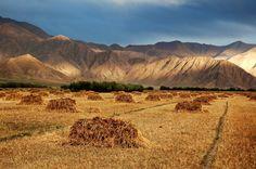 Haystacks near Gyantse, Tibet | by iancowe
