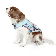 Winston Coat, $30, now featured on Fab. [Dog, Preppie Pup]