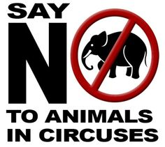 """Your """"entertainment"""" is their pain! (elephants have bull hooks driven through their feet...bears paws are lit on fire...all animals are locked in small dark cages and malnourished...next time you want to go to the circus, go to a dog fight instead, it's the same horrific cruelty, just more honest)"""