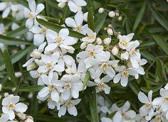 Comment Planter, Plantation, Green Flowers, Habitats, Plants, Culture, Important, Facades, Images