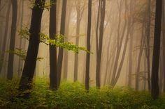 Fototapeta Foggy mystický les na podzim ✓ Snadná instalace ✓ 365 denní záruka vrácení peněz ✓ Procházejte ostatní vzory z této kolekce!