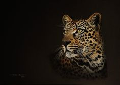 Leopard painting in Gouache by wildlife artist Noel Smith