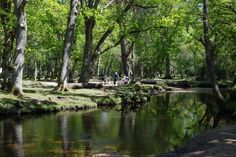 New Forest circular walk from Ober Corner in Hampshire - Trees, streams, deer…