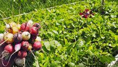 Alchymie bez chemie, záhony bez orání... Apple, Fruit, Chemistry, Apple Fruit, Apples