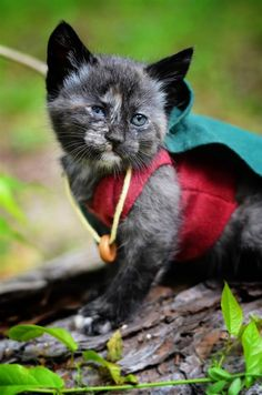 Photog dresses kittens as beloved film, TV characters Kittens In Costumes, Pet Costumes, Kittens Playing, Cats And Kittens, Kitty Cats, Animals And Pets, Cute Animals, Beloved Film, Cat Cosplay