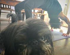 """Gefällt 1,325 Mal, 66 Kommentare - Orson Johnny Valentine (@everythingisorson) auf Instagram: """"Yoga ❤️️"""""""