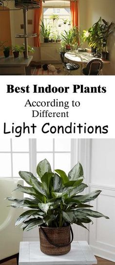 Using Light as a Guide for Selecting Indoor Plants. If an indoor or house plant does not have appropriate light, nothing else you do for it will help. More water and fertilizer are not substitutes for inadequate light. So, when selecting a plant it is best to start with the available light, not the plant species.