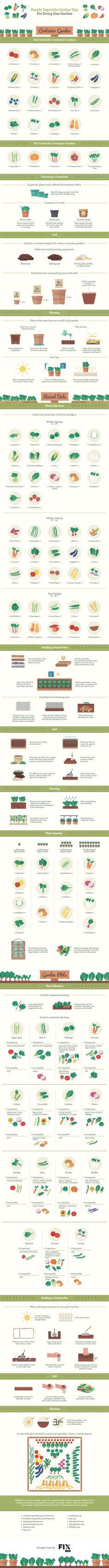 Simple Vegetable Gardening Basics for Every Size Garden