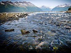 Solomon Gulch Trail, Valdez, Alaska World's Best Hikes: 20 Hikers' Dream Trails - National Geographic