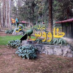Park Sa'ee, Tehran, Iran -- tavoos (peacock) | pic from #myepictriptoIran @FigandQuince (Persian food culture blog)