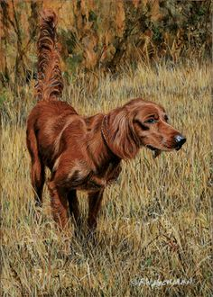 My dog, Gauge, a Red Setter
