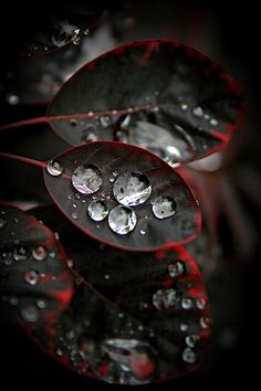 Raindrops....they look like diamonds