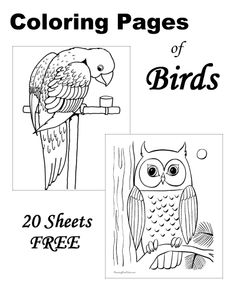 Bird coloring sheets - 20 FREE printable pages!