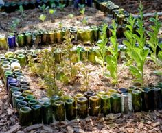 Repurpose empty wine bottles as garden borders to help to curb soil erosion.