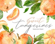 Watercolor clipart with tangerines and leavesDigital Clip Art (no physical items will be sent)Bright hand painted watercolor fruits and leaves for wedding invitations, greeting cards, party invitations, posters, birthday projects, flyers, brochures, covers, presentations, print templates and so on*** You will receive• 22 separate elements (4.2x3.9 up to 6.6x7 inch)• 3 arrangementsPlease read Shop policies on main page of my Shop,and if You have questions please convo me :) Travel Illustration, Graphic Illustration, Illustrations, Watercolor Fruit, Watercolor Flowers, Seville Orange Marmalade, Flower Clipart, Print Templates, Bright Green