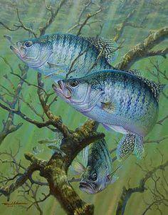 Brush Bite-White Crappie by Mark Susinno Wildlife Paintings, Wildlife Art, Fish Paintings, Bear Gallery, Fish Artwork, Crappie Fishing, Bass Fishing, Fishing Hole, Fishing Bait