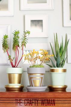 pastel painted pots lined with golden shapes