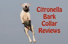 Citronella Dog Bark collar reviews Citronella Bark Collar, All Types Of Dogs, Shock Collar, Dog Barking, Dog Training, Your Dog, Collars, Pets, Necklaces