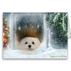 Snowdrop the Maltese Christmas Card #christmas #holiday #maltese #cards