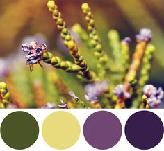 Color Palette Inspiration: Nature Inspired