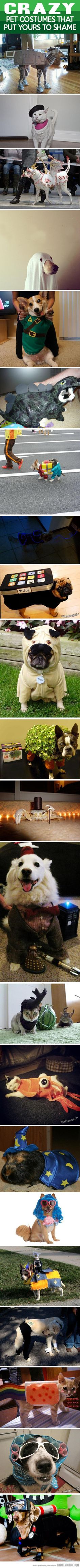 25 crazy pet costumes that put yours to shame…