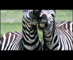 Hello, here I have cut together a little funny talking animal videos. The clips I've found on the BBC - funny talking animals. But I took the clips I found Baby Animals, Funny Animals, Cute Animals, I Love To Laugh, Make You Smile, Animal Pictures, Funny Pictures, Funny Talking, Talking Animals